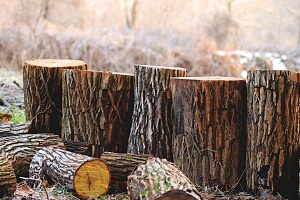 lumber as one of the 9 different types of plywood