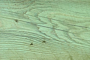 Green colored board of pressure treated wood