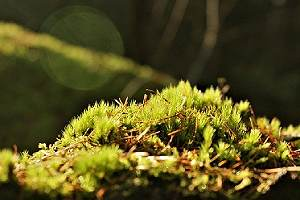 Closeup of green grass. Grasscrete, is a technique use in Green building