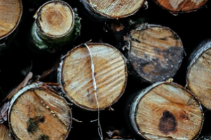 Species Of Wood