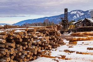 western red cedar logs staked in a pile