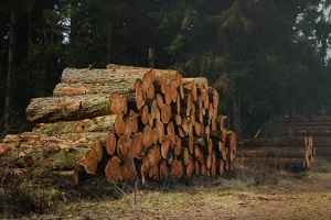 big wood pieces placed outside a wholesale lumber supplier